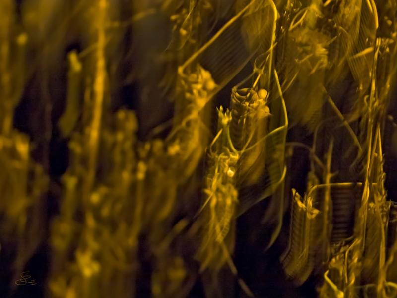 Subhash: «Insectos dormidos #8596», archival pigment print 35.6x 47.5cm